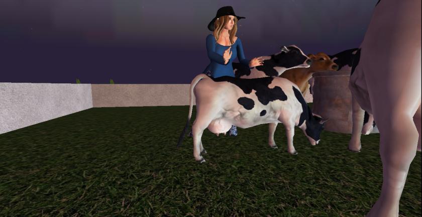 10_cows_006
